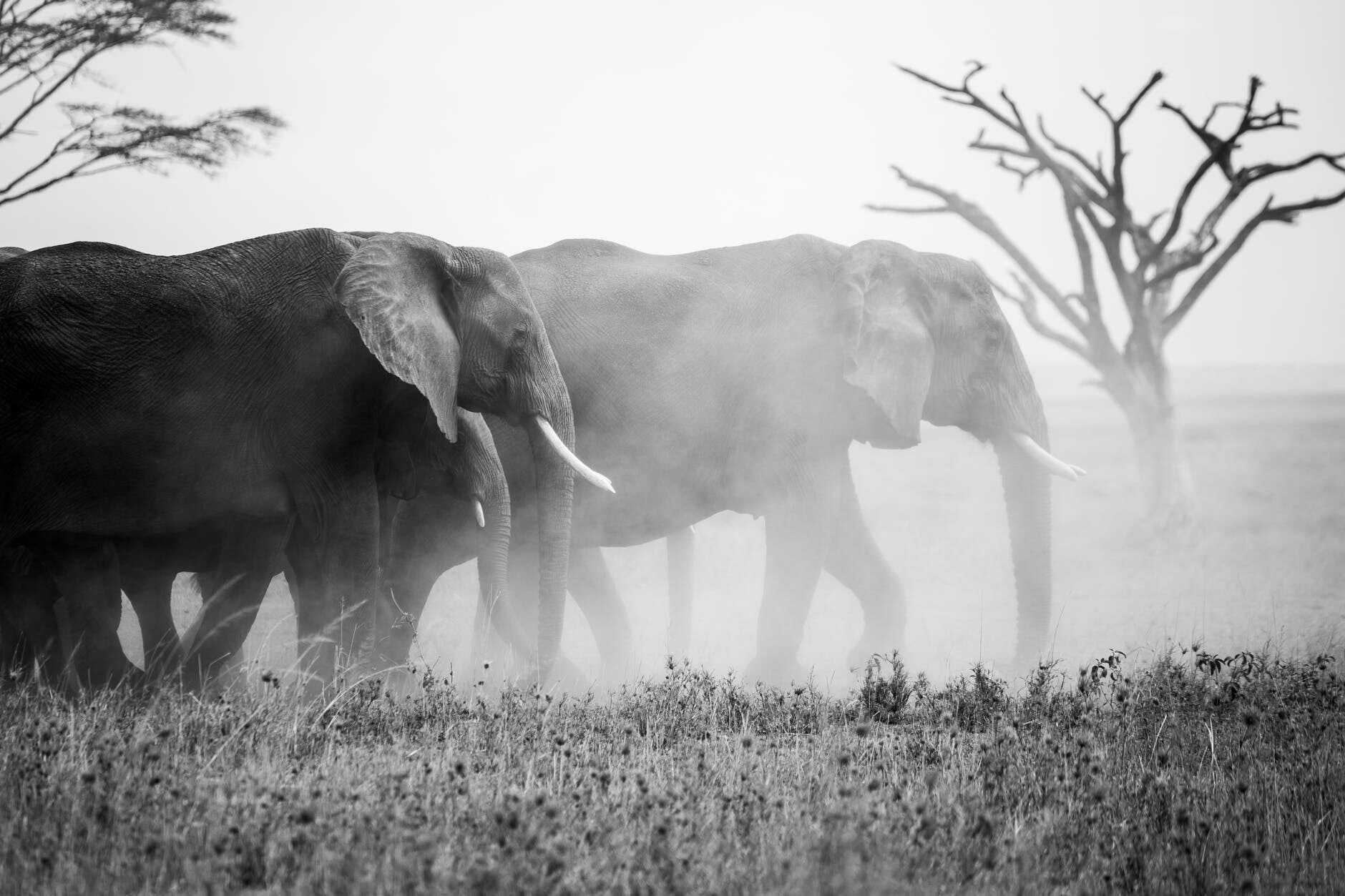 Elephants In Thailand: An Easy 2021 Guide