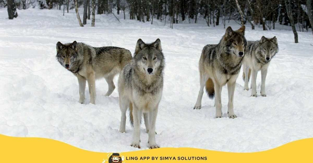 Wild Animals In Lithuania